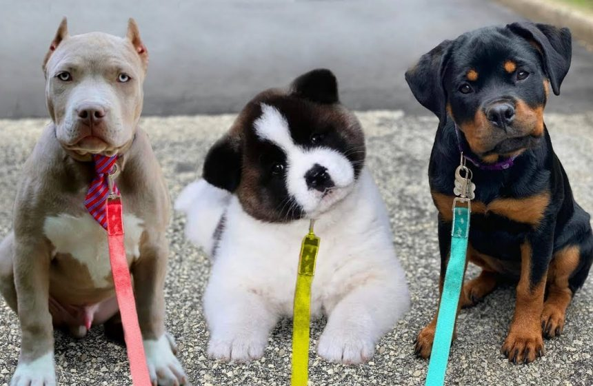 Top 10 most expensive dogs in the world